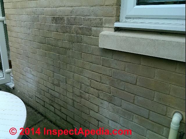 Algae on Brick Wall 323 IAPcs