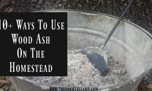 14 Beautiful Fireplace ashes In Garden