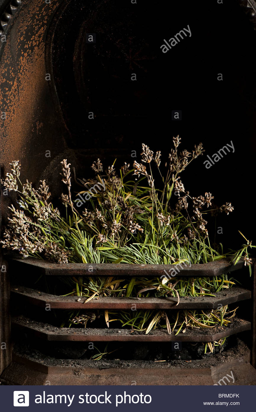 Fireplace Grate with Blower Beautiful Drying Lavender Lavandula Angustifolia Hidcote In A